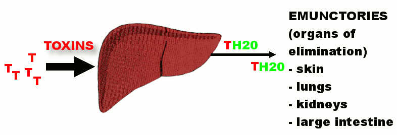 Healthy and Liver Toxins
