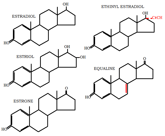 Human Estrogen and Synthetic Estrogen
